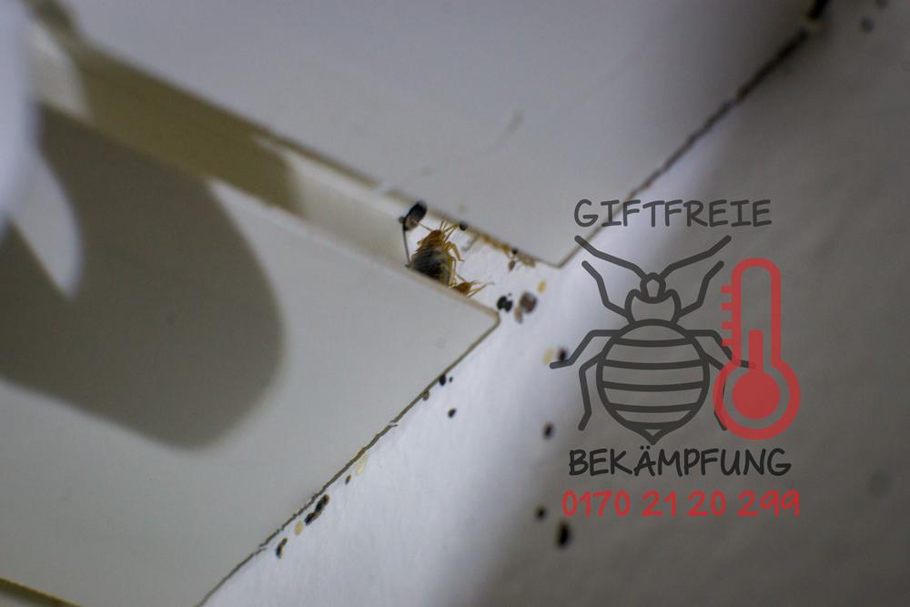 bettwanzen resistenz dr arlette vander pan bettwanzen forschung. Black Bedroom Furniture Sets. Home Design Ideas